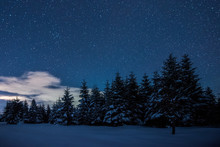 Starry Dark Sky And Spruces In Carpathian Mountains At Night In Winter