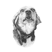 Hand Drawn Vintage Style Sketch Of Cute Dog.