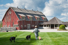 Woman And Three Dogs Walk Away Towards Barn
