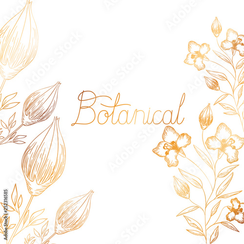 Foto  botanical label with plants isolated icon