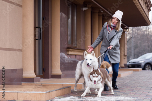 Cuadros en Lienzo Woman having troubles holding two excited husky dogs on a leash