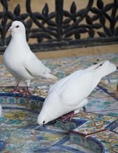 Doves At Parque De Maria Luisa...