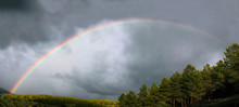 Bright Rainbow Shining On Gray Overcast Sky Near Green Forest In Amazing Countryside