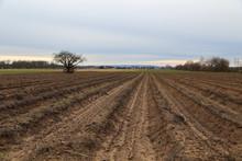 Agriculture. Asparagus Field I...