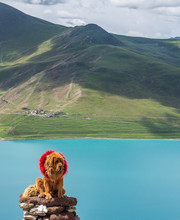 Cute Big Dog In Red Wreath Sitting On Stack Of Stones Near Calm Lake And Green Hill On Cloudy Day In Tibet