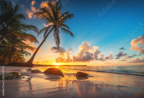 Obraz Tropikalna wyspa z palmami na plaży Punta Cana, Dominikana - fototapety do salonu