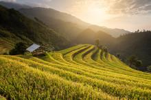 Beautiful Landscape Rice Field...