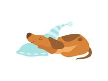 Cute Dachshund Dog Animal Sleeping On Pillow Vector Illustration