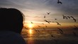 Silhouette of woman relaxing herself on the bridge at shore with seagulls flying