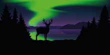 Reindeer By The Lake With Beautiful Green Polar Lights Wildlife Nature Landscape Vector Illustration EPS10