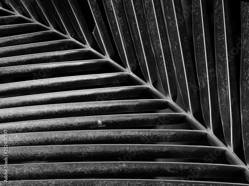 Foto-Fahne - black and white palm leaf with light and shadow (von srckomkrit)