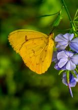 Closeup   Beautiful Butterfly ...