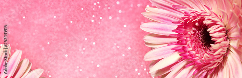 Pink gerbera flower.Concept for design, flower business, congratulations. Close-up, selective focus. Banner