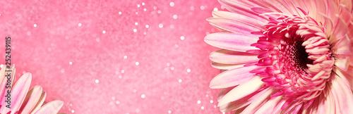 Fotobehang Gerbera Pink gerbera flower.Concept for design, flower business, congratulations. Close-up, selective focus. Banner