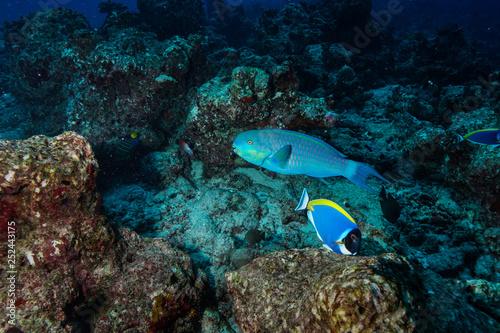 Foto op Plexiglas Panoramafoto s diving the Maldives