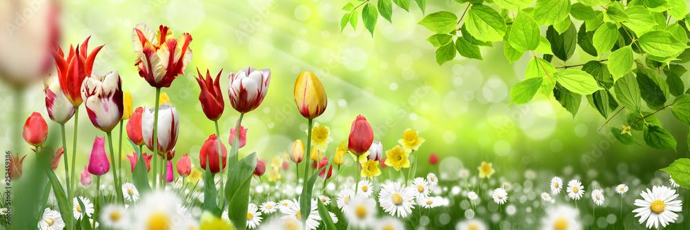 Fototapeta Blumen 1029