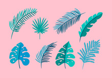 Set Of Vector Isolated Flat Leaves Palm, Exotic On Pink Background. Summer Scandinavian Hand Drawn Tropical Nature Monstera Illustration For Design. For Greeting Card, Print, Books