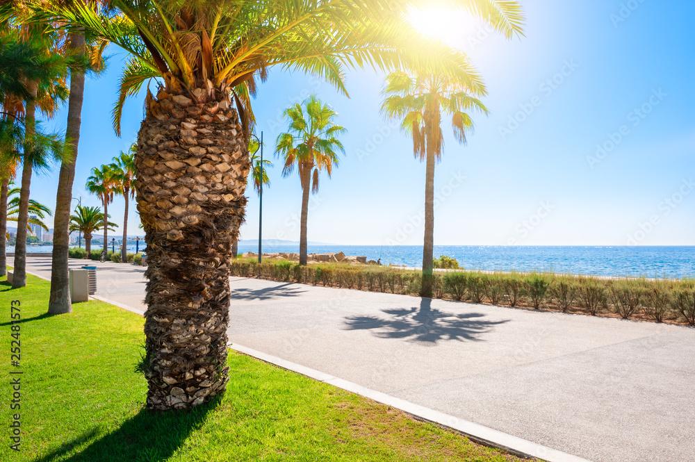 Fototapety, obrazy: Beautiful sea promenade with palms in Limassol, Cyprus.