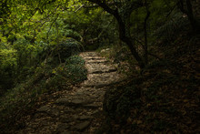 Stone Paves Stairway Path Way For Unknown Traveler In Deep Dark Mystic Fairy Tale Forest Beautiful Nature Landscape Environment