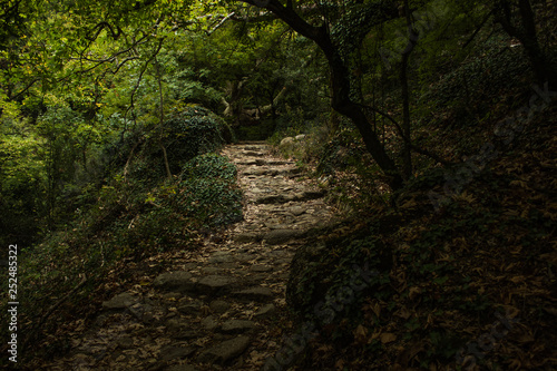 Fotomural stone paves stairway path way for unknown traveler in deep dark mystic fairy tal