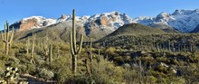 Saguaro Cactus Of The Sonoran Desert And Snow In The Catalina Mountains Outside Tucson, Arizona.