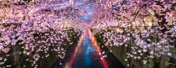 Kirschblüte im Frühling bei Nacht in Nakameguro, Tokio, Japan