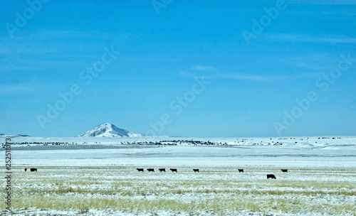 Photo  distant cattle on snowy field