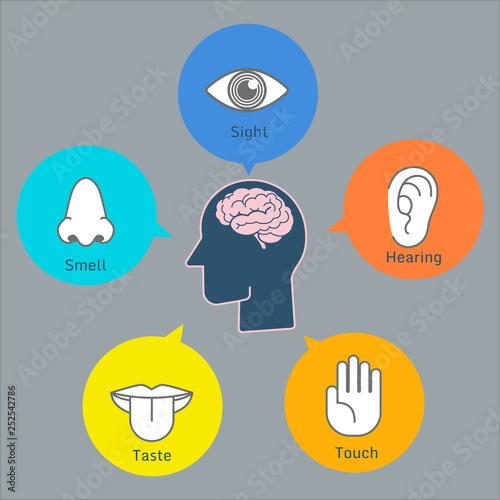 Foto Colorful five human senses illustration infographic presentation