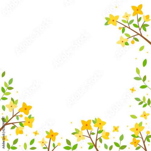 Tablou Canvas Forsythia flowers background
