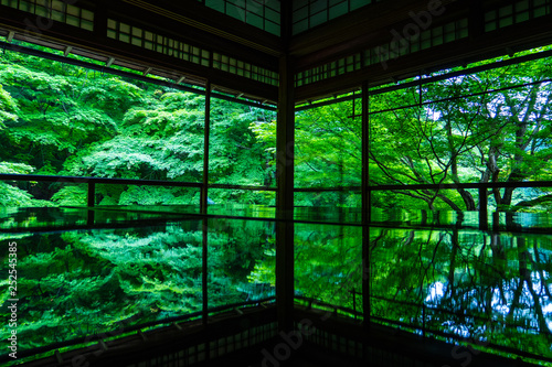 京都 瑠璃光院 逆さ新緑 Wallpaper Mural