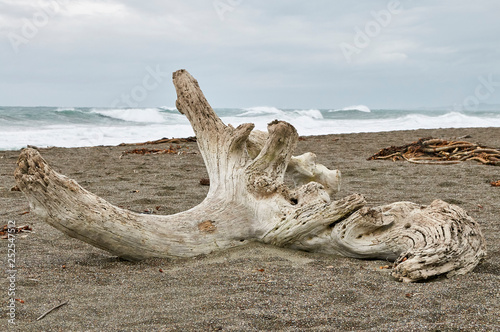 large log of driftwood on the beach Wallpaper Mural