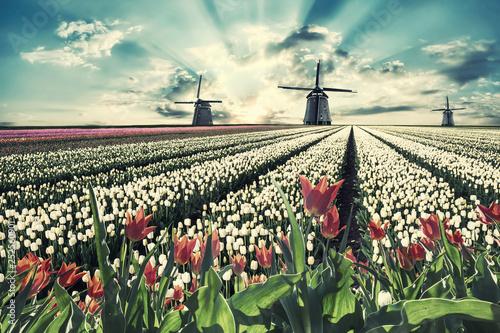 Türaufkleber Pistazie Vintage landscape with tulips and windmill