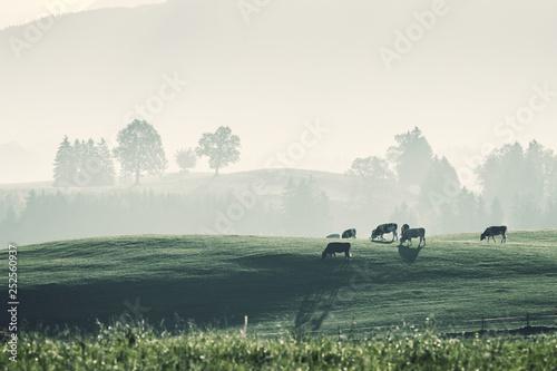 Poster Kaki Farming vintage landscape with cows