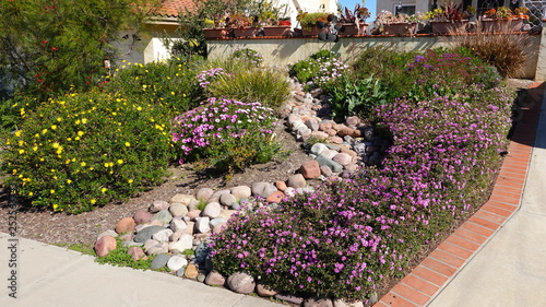 Aluminium Prints Salmon Drought tolerant plants in yard