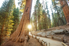 Sunset In Sequoia National Par...