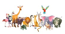 Wild Animals. Safari Wildlife ...
