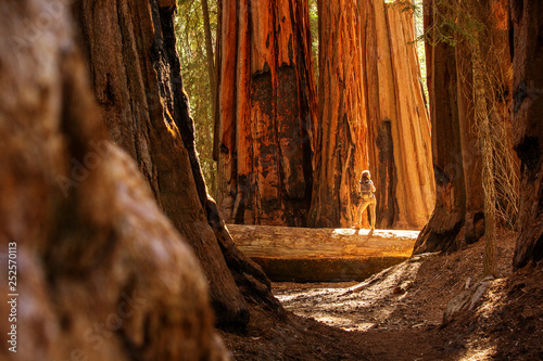 Pinturas sobre lienzo  Hiker in Sequoia national park in California, USA