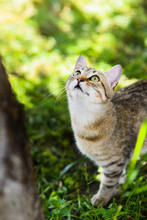 Cute Grey Cat Hunting In Grass Chasing Bird