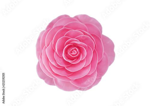 Camellia blossom in white background Fototapeta