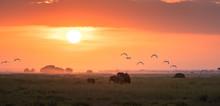 Elephants At Sunrise In Amboseli National Park