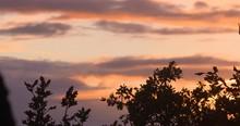 Winter Golden Sunset Sky Tree Silhouette