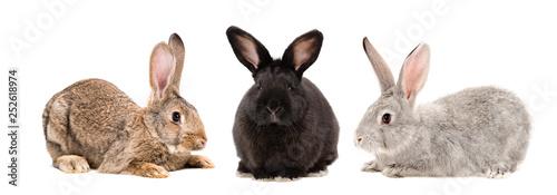 Fotografia Three rabbits together isolated on white background