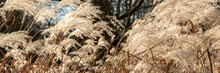 Panorama Of Weed Grasses In Th...