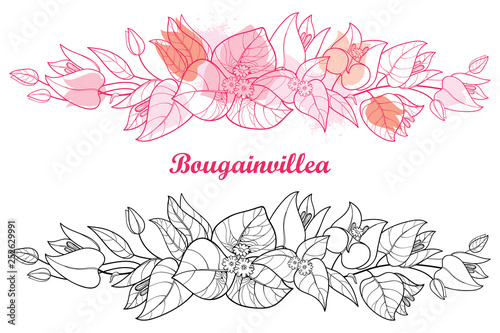 Tela Horizontal border of outline Bougainvillea or Buganvilla flower, bud and leaf in black and pink isolated on white background