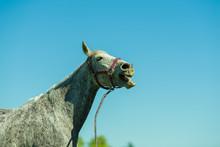 A Happy Laughing Horse Against Blue Sky / Ryan Cowan /