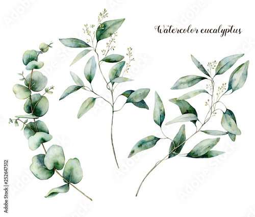 Fotografía  Watercolor seeded eucalyptus set