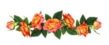 Orange Rose Flowers In A Line Arrangement