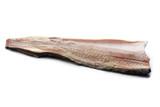 Jesiotr świeże mięso ryby na białym tle.