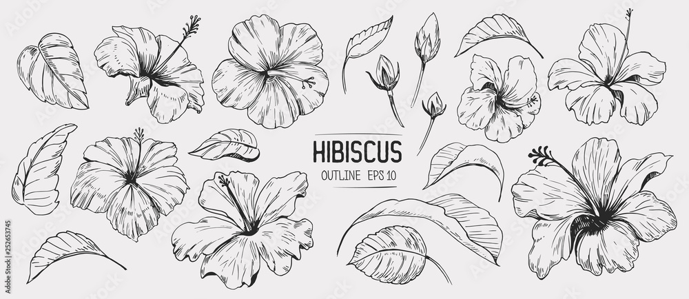 Fototapety, obrazy: Hibiscus flower. Set of hand drawn illustration. Vector outline. Isolated