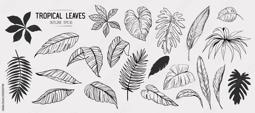 Fototapety, obrazy: Tropical leaves. Set of hand drawn illustration. Vector. Isolated